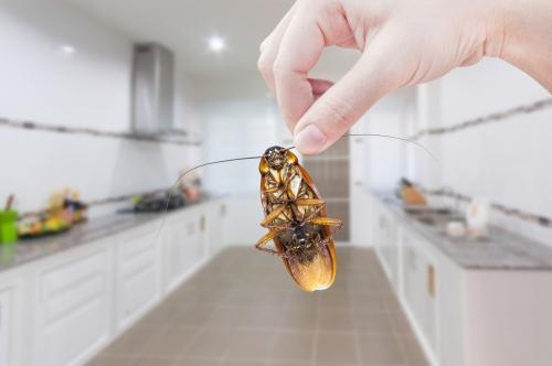 Борная кислота от тараканов при беременности. Помогает ли борная кислота от тараканов на самом деле
