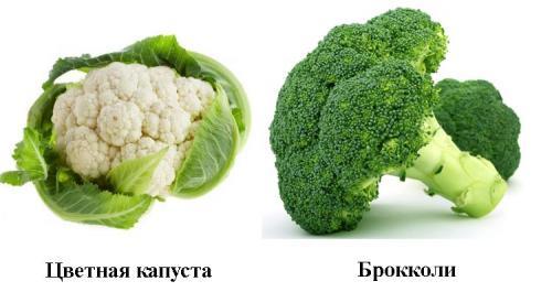 Чем брокколи отличается от цветной капусты. Знакомимся с родственниками огородной капусты